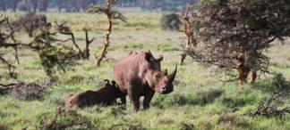 Special der erfolgreichen SiiA-Filmserie mit Andreas Kieling zum Thema Artenschutz