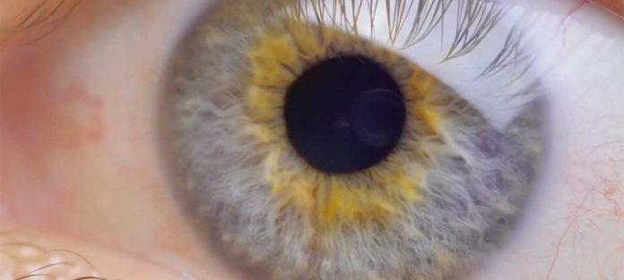 Augenmessung und Augen-Check auf Top-Niveau
